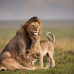 Federico_Veronesi_2009-01-28 Masai Mara_4728